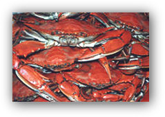 Crabs from the Barnegat Bay