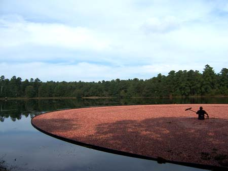 Cranberry Harvest at Double Trouble