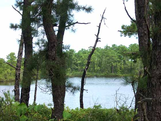 A peaceful lake nestled in the Pines