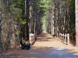 Bridge over Lochiel Creek, on the Barnegat Rail Trail