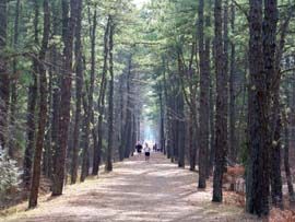 Barnegat Rail Trail