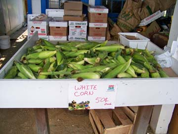 Jersey corn is abundant at Herbert's Market in Waretown!